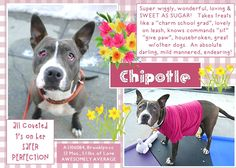 Chipotl sweetest dog girl just out of puppyhood is on death list today! If you would like to foster or adopt and  can't make it to the shelter, please write an email NOW to the Urgent Help Desk at Helpdogs@Urgentpodr.org Their experienced volunteers will assist you one-on-one with rescues and the application process. Transport can be arranged by rescues to the homes of approved fosters or adopters within 3-4 hours of New York City