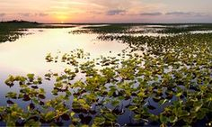 Florida environmentalists are cheering the death of a bill that would have allowed fracking in the Everglades.