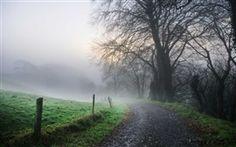Morgen, Straße, Nebel, Bäume