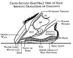 """Natural Hoof Care Jaime Jackson 