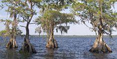 FREE IN ORLANDO/KISSIMMEE: Disney Wilderness Preserve (20 mi South of Orlando)