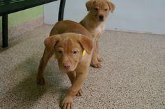 Meet Bluto - an adoptable pet Dog  lostourhome.org Tempe AZ   Share!
