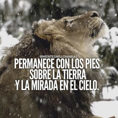 Lion Quotes, Words Quotes, Qoutes, Millionaire Quotes, Clever Quotes, Motivational Phrases, Gods Plan, Business Motivation, Spanish Quotes