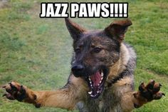 LOL #German #Shepherd oh what a great laugh. Description from pinterest.com. I searched for this on bing.com/images