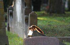 Impressionen vom Pragfriedhof in Stuttgart.