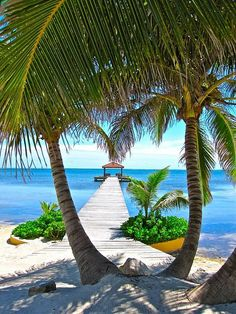 Belize. I can picture myself under those palm trees drinking a Piña Colada