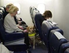 Traveling With a Service Dog: Guidelines and ResourcesAnything Pawsable