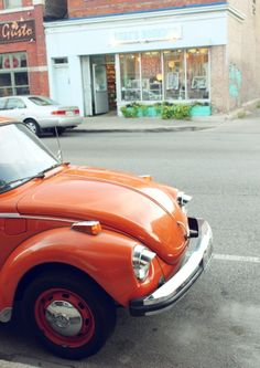 orange beetles rock the world, or at least this block