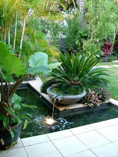 Lavastone bowl overflowing to water reservoir in nedlands garden with cycads and tropical plants - Water features in the garden, Diy backyard landscaping, Backyard garden, Garden fountains, Tropical - Tropical Garden Design, Tropical Landscaping, Tropical Plants, Landscaping Ideas, Garden Landscaping, Hawaiian Plants, Tropical Outdoor Decor, Corner Landscaping, Small Tropical Gardens