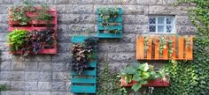 These Old Pallets Were Transformed Into A Beautiful Wall Garden Yes.