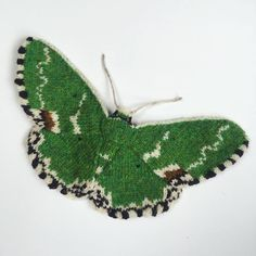 Blotched Emerald Moth (Comibaena Bajularia) Hand Knit By Max Alexander in Shetland Wool