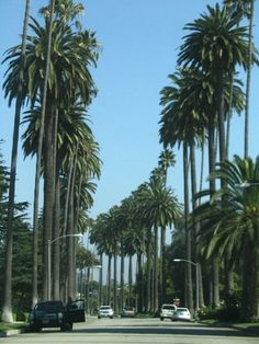 Los Angeles California home of the palm trees.