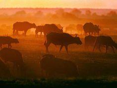 Sunset - La réserve de Moremi