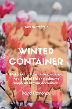 When your plants from summer and autumn have started to die off, your garden will lose lots of colour. The dark, cold months give plenty of opportunity however to create winter and Christmas containers that are full of life and colour. Don't let the chillier months stop you from creating a beautiful display to cheer you up. Some plants actually look better in the cold months and creating a fantastic winter display looks great on your porch, inside your house and in the back garden. Large Plants, Cool Plants, Christmas Colors, Christmas Themes, Winter Bedding, Spring Flowering Bulbs, Winter Sky, Cheer You Up, Planting Bulbs