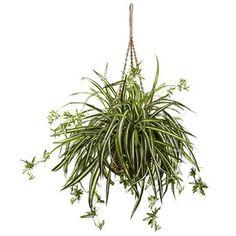 Indoor Plants You'll Love   Wayfair