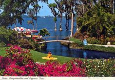 Florida Memory - Roses, bougainvillea and cypress trees