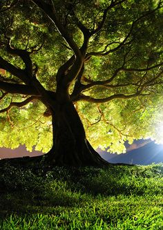 Huge green tree with sunlight - Beautiful nature images, flower photos, animal pictures, landscape photographs. Amazing nature photography.