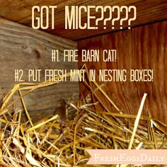 Fresh Eggs Daily®: Not a Creature was Stirring - Got Mice in your Coop?
