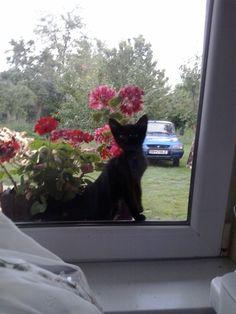 #lovemycat #mili #blackcat #heyyou #goodmorning