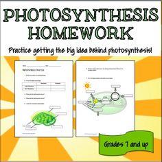 Homework help photosynthesis explanation