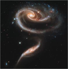 The Rose Galaxies