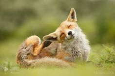You said WHAT?!! by Roeselien Raimond#素材库素材via IFtemppicpinned in Building blocksdownld in ios #November 23 2016 at 01:50AM#via IF