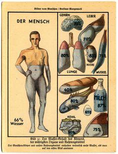 Der Wasser, from Bilder vom Menschen (1931), originally published in the Berliner Morgenpost