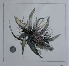 Pen and wash dried Protea.
