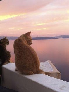 Cats with a caldera view, Santorini, Greece.