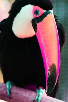 Toucan - Such a colourful bird