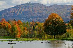 Our beautiful region! Canada Travel, Mount Rainier, Falling In Love, Photos, Mountains, Nature, Golf, Beautiful, Stone