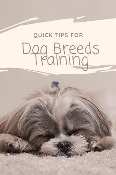 Training your dog is about building your relationship with your dog and setting up boundaries. Be firm yet consistent and you'll see outstanding results when it comes to your dog training efforts. Brain Training, Dog Training Tips, Free Training, Leash Training, Agility Training, Dog Agility, Cute Dogs Breeds, Dog Breeds, Spray Anti Puce