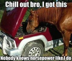 seu cavalos estão com toda força?!