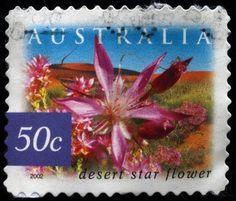 Australian Desert Star Flower