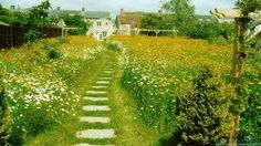 Image result for meadow grass path