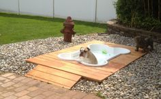 Dog swimming pool complete with their own fire hydrant!