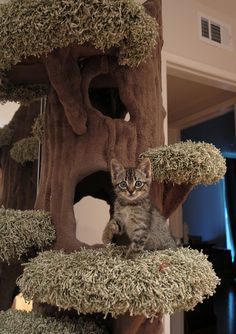 Great Tree for indoor-cat climbing!