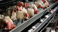 """USDA to Let Industry Self-Inspect Chicken. Because the industry is not miserable and horrible enough even with USDA """"inspections"""". Just awful."""