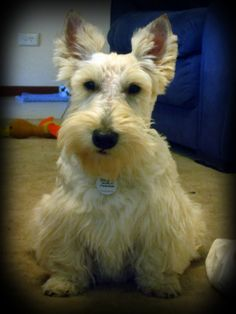 "The Dougall Diaries: My first ""big boy"" furcut..."