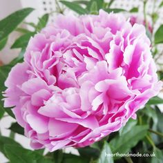 Why I'm Not Ready To Let Go Of Summer! Not Yet - gorgeous peonies are excuse #1