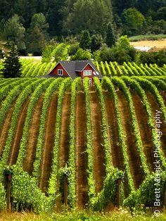 Williamette Valley Oregon Vineyard Fine Art by BMissickPhotography,