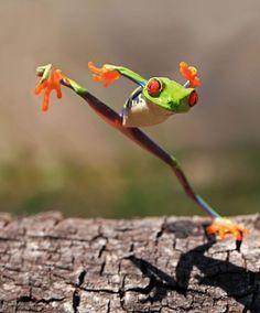 Hop til you drop.    Frog