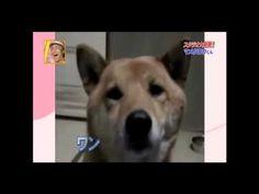 Este perro es un experto en ladrar sin hacer ruido