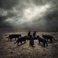Les albums de Céline E.: Black Cat