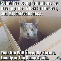 SURPRISE... http://cheezburger.com/9040929536 Congratulations You Have Opened A Box Full Of Love, and Mischievousness.. Your life Will Never Be Boring, Lonely or The Same Again.