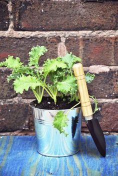 You might be wondering about growing your own kale but perhaps you lack garden space. What about container grown kale? Will kale grow… Garden Plants Vegetable, Container Gardening Vegetables, Tomato Garden, Planting Vegetables, Garden Pots, Kale Vegetable, Herb Garden, Tomato Plants, Growing Tomatoes Indoors
