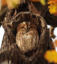 Sweet little Tawny Owl found a perfect nook!