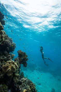 Snorkelling Great Barrier Reef, Hamilton Island Amazing Things To Do in Australia Best Honeymoon Destinations, Dream Vacations, Romantic Vacations, Romantic Travel, Travel Destinations, Great Barrier Reef Snorkeling, Wallpaper Travel, Photos Sous-marines, Great Photos