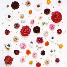 designed by Janie Medley Flora Design.photographer, Love By Serena Flowers Nature, My Flower, Spring Flowers, Flower Art, Beautiful Flowers, Flora Design, No Rain, Ranunculus, Peony