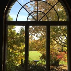 Out my sunroom window today … Happy Sunday!